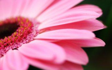 цветы, природа, макро фото, лепестки, flower wallpapers, на природе, макро фотографии, пинк