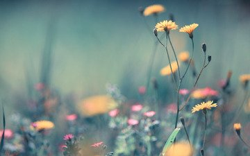 flowers, grass, plants, macro, field, summer, blur, pink, yellow, ease
