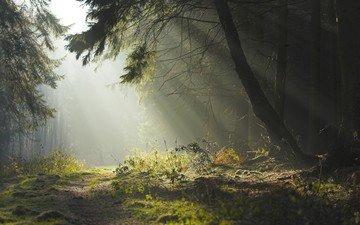 дорога, деревья, вечер, природа, лес, утро, лето, красота, тропинка, дымка, солнечные лучи