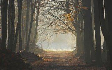 деревья, лес, листья, туман, тропа, бревна
