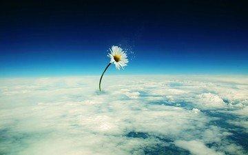 облака, цветок, обработка