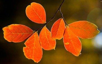природа, дерево, листья, макро, осень, nature pictures, autumn wallpapers, листья, дерево
