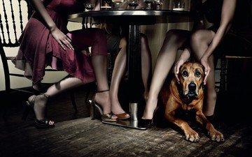 table, dog, girls, restaurant