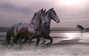 лошадь, залив, жеребец