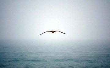 вода, туман, чайка