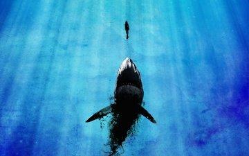 girl, rays of light, mega shark