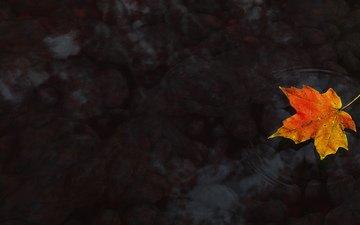 вода, осень, клен, кленовый лист