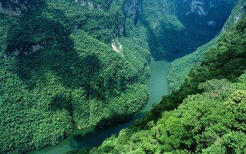 река, горы, лес, зелёный, ущелье, мексика