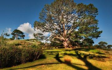 небо, трава, природа, дерево, листья, ветви, кусты