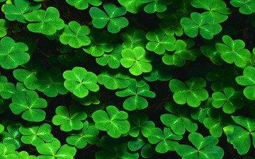трава, зелень, листья