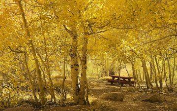 парк, скамейка, деревье
