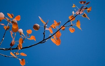 the sky, branch, foliage, autumn