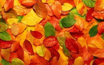 желтый, листья, листва, осень, оранжевый