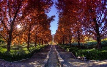 деревья, осень, аллея, ступени