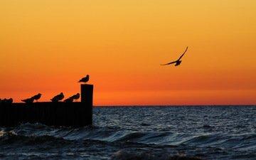 вечер, закат, море, чайки