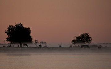 деревья, река, пейзаж, туман, сергей доля