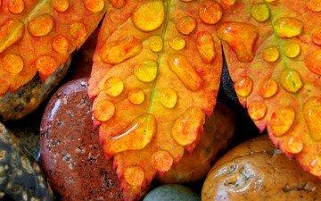 капли, лист, камень, мокрый