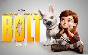 dog, walt