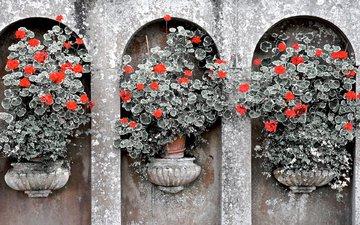 flowers, pot