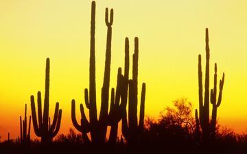 закат, пустыня, колючки, кактус