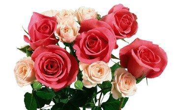 роза, букет