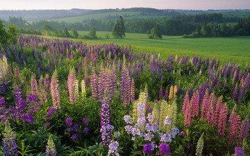 цветы, трава, лес, поле, лето, луг, полевые