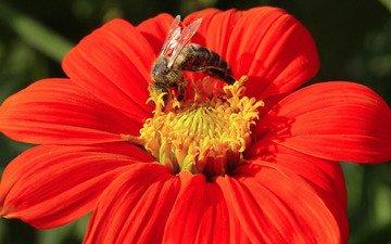 flower, bud, bee