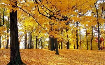 деревья, лес, листья, листва, осень