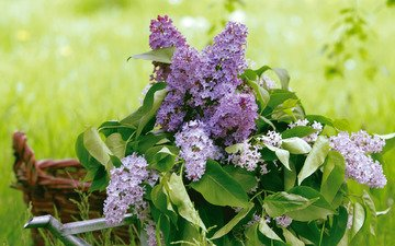 greens, leaves, bouquet, basket, lilac, lake