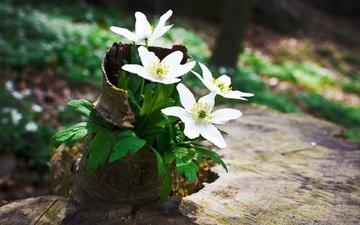 цветы, зелень, пенек, лесные