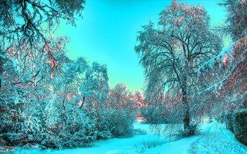 снег, лес, зима