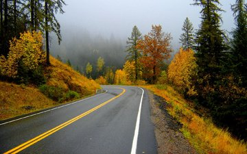 природа, туман, пейзажи, осень, дороги, поворот, желтое, шоссе, золотистое