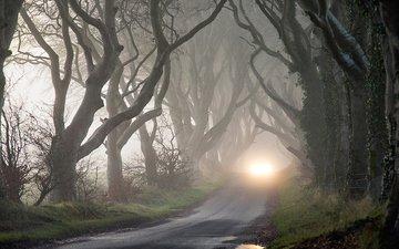 деревья, мрак, туман, осень, фары, таинственность