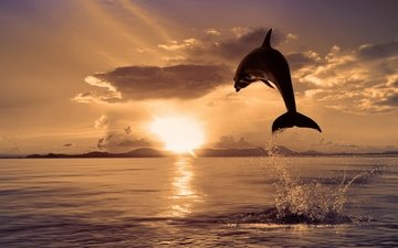 природа, море, цвет, прыжок, дельфин