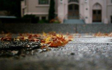 листья, макро, осень, асфальт, лужа, опавшие