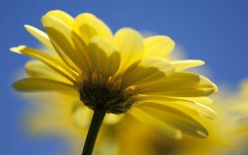 природа, желтый, цветок