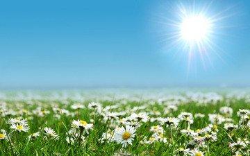 цветы, солнце, природа, фото, поля, поле, пейзажи, поляна