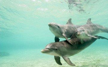 вода, стая, дельфины, подводный мир