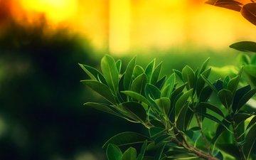 макро, одну из веток, дерева с молодыми, зелеными, ветками, сфотографировали, в стиле