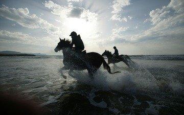 природа, обои, фото, фон, море, пляж, капли, брызги, лошади, изображение, наездники