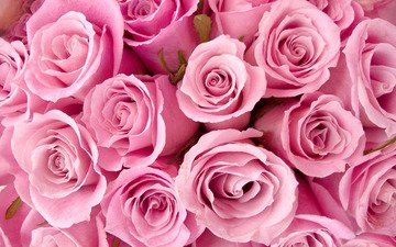 цветы, розы, букет, розовый, cvety, rozy, buket