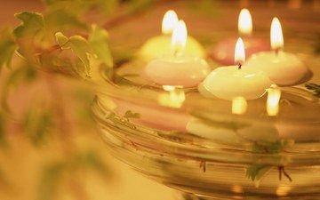 свет, вода, свечи, романтика, растение, тепло