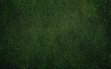 трава, зелень, обои, текстура, газон, грин