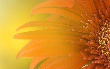 цветок, лепестки, блики, оранжевый