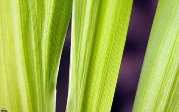 трава, листья, зеленые