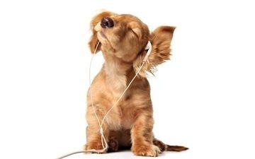 наушники, щенок, слушает, собачка