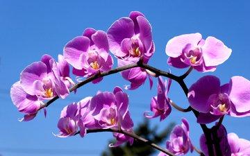 орхидея, синее небо, комильфо