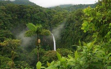 водопад, пальмы, тропики, джунгли