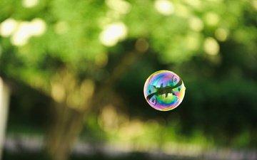 зелень, отражение, мыльные пузыри