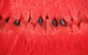 macro, berry, watermelon, the flesh
